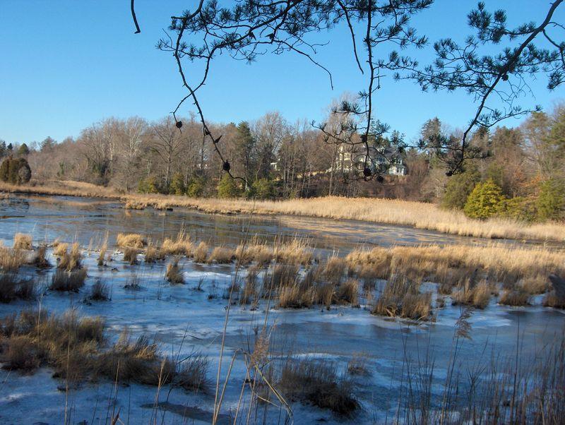 Pond 004